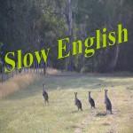 Slow-English